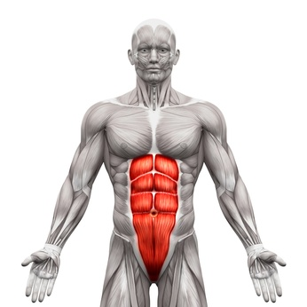 abdominal exercise that tones your entire midsection