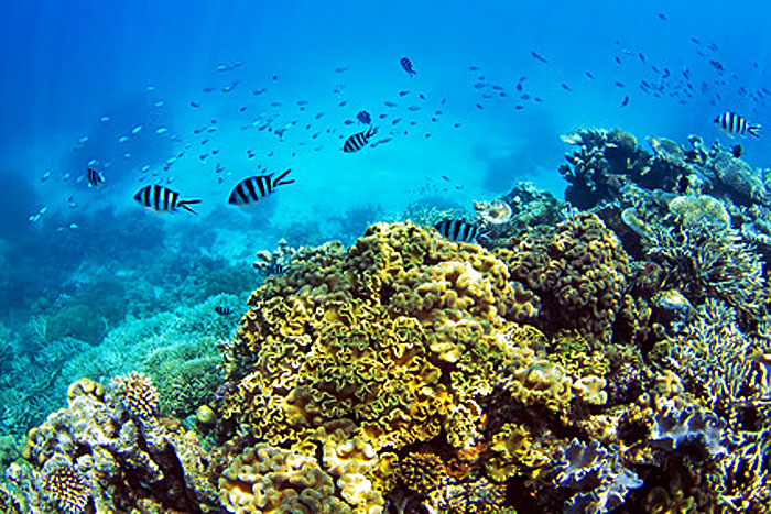 the calcium factor - coral reefs