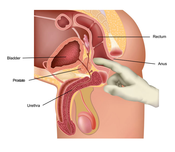 prostate massage anatomy diagram
