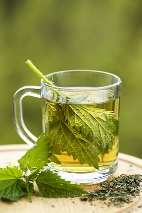 Stinging Nettle for improved prostate health