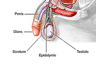 Female Doctor Testicular Exam http://www.prostate-massage-and-health.com/testicular-exam.html