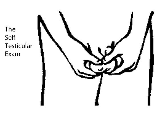 self testicular exam