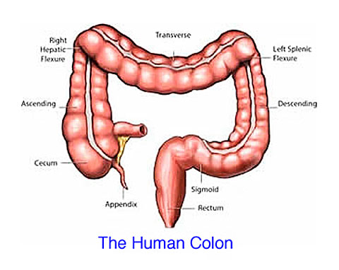 does colon cleansing work?