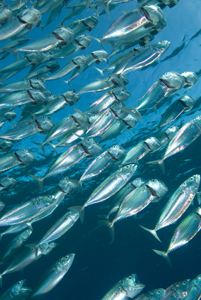 overlooked benefit of fish oil