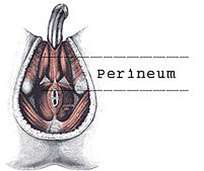 perineum massage and prostate relief